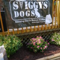 {celebration of service} stiggy's dogs