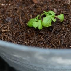 gro-ables herbs | simplykierste.com