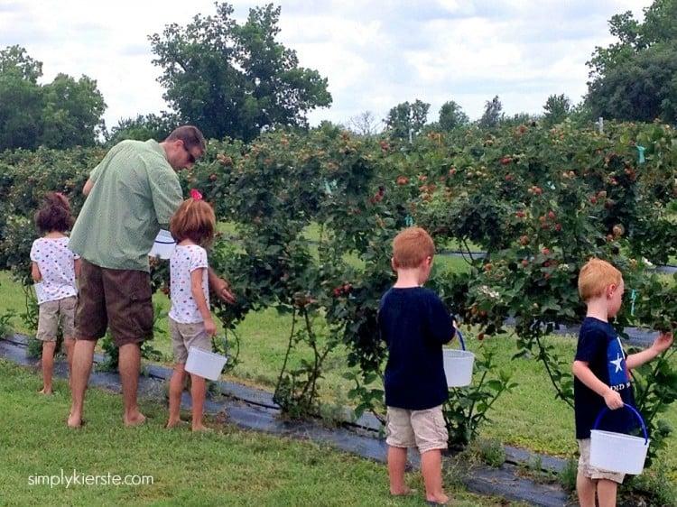 picking berries, making jam, summer family fun | oldsaltfarm.com