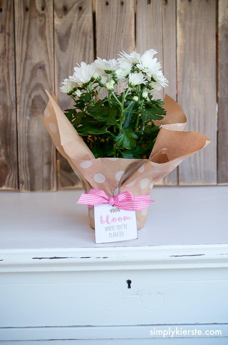 Bloom Where You're Planted | Free Printable Tag & Gift Ideas | oldsaltfarm.com