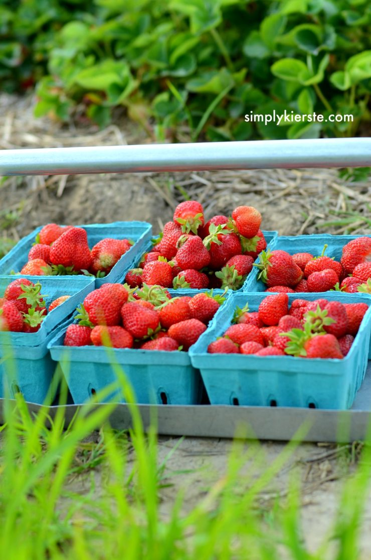Strawberry Picking | How to do Summer on a Budget | simplykierste.com