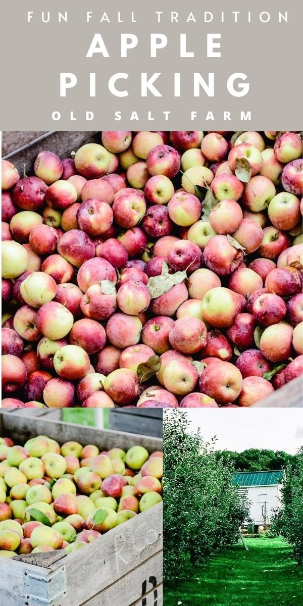 Apple Picking| Fall Traditions