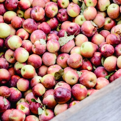 Apple Picking: A Fall Tradition