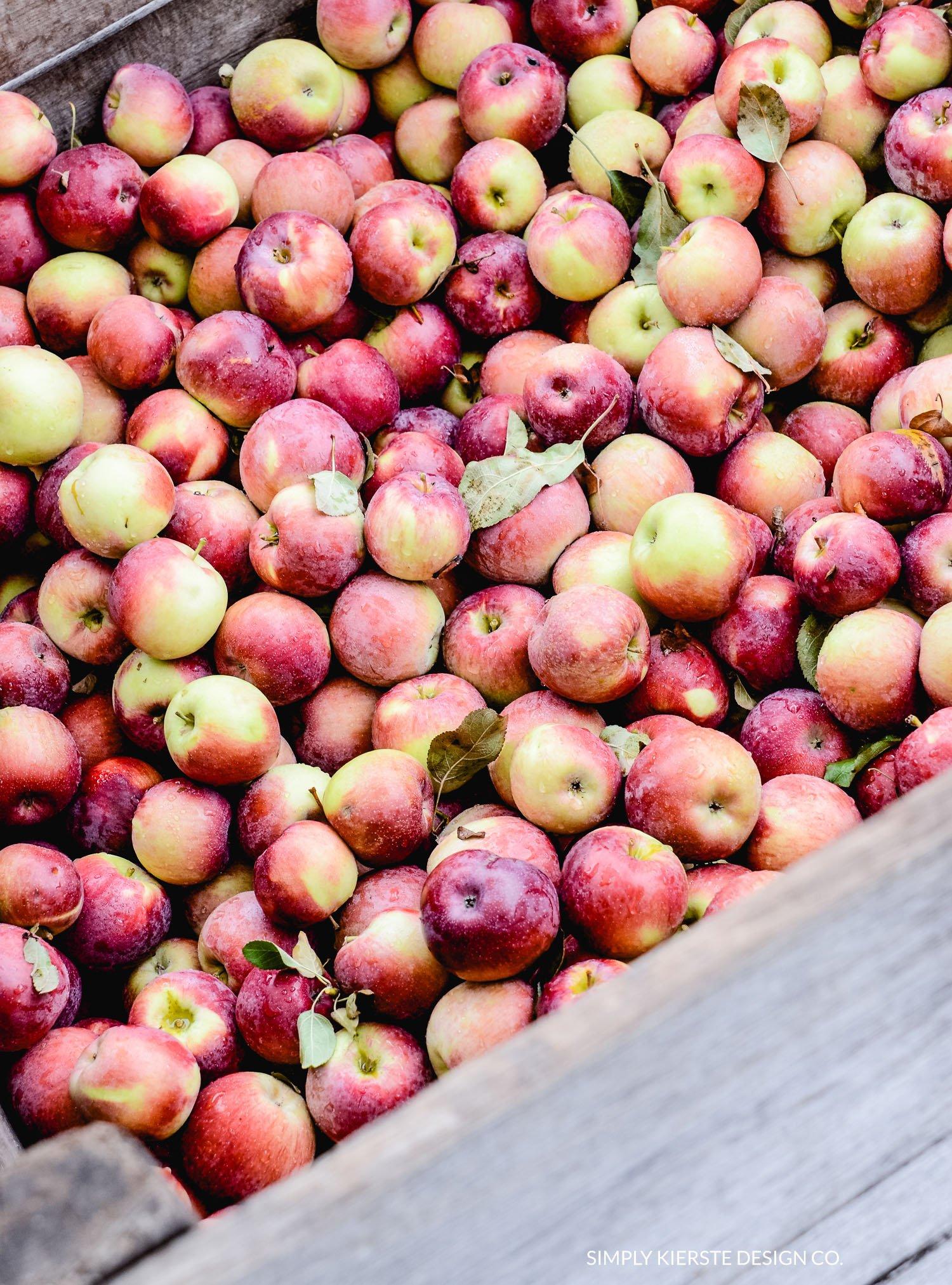 Apple Picking | Apple Farm | Fall Family Tradition | simplykierste.com