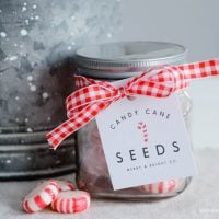 Candy Cane Seeds:  Christmas Gift Idea
