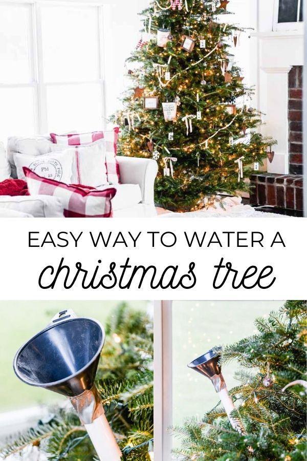 Easy Way to Water Your Christmas Tree
