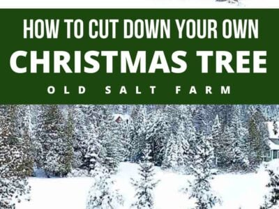 Cutting Down Your Own Christmas Tree Tips